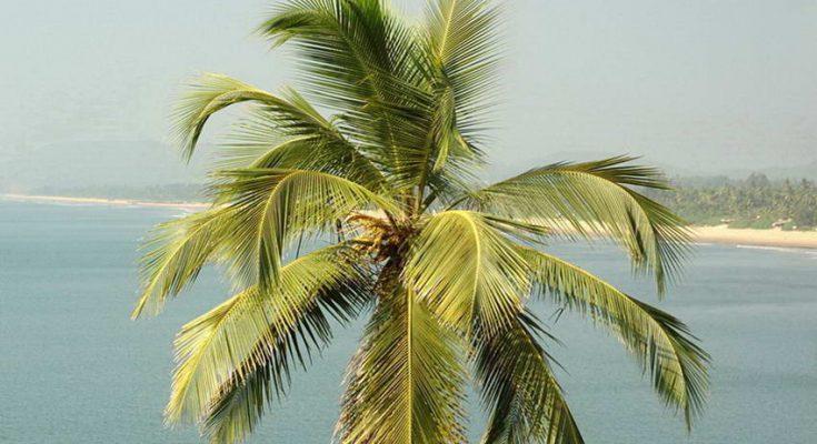 גן עדן טרופי ברוולה - Beruwala